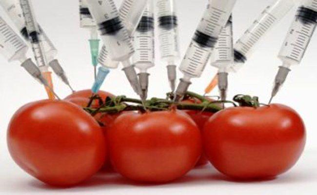 Μεταλλαγμένα τρόφιμα 2013