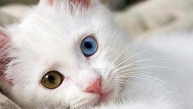 Photo of Ο άσχημος γάτος – Μια υπέροχη ιστορία!