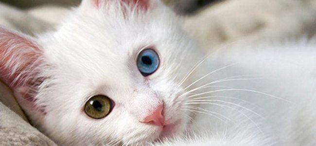 Ο άσχημος γάτος - Μια υπέροχη ιστορία!