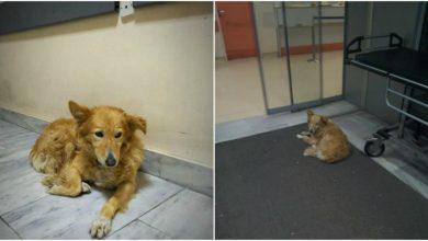 Photo of Σκυλίτσα περιμένει 5 χρόνια έξω από το νοσοκομείο Βόλου όπου πέθανε ο κηδεμόνας της. Ένα σπίτι για αυτήν;