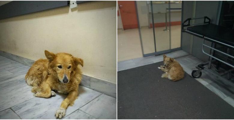 Σκυλίτσα περιμένει 5 χρόνια έξω από το νοσοκομείο Βόλου όπου πέθανε ο κηδεμόνας της